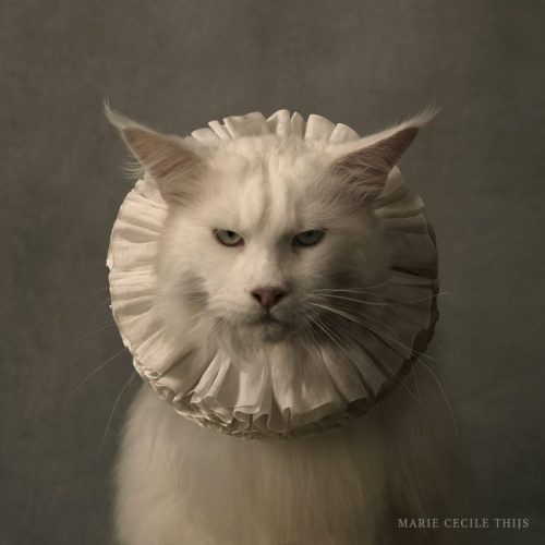 Cat with White Collar VII