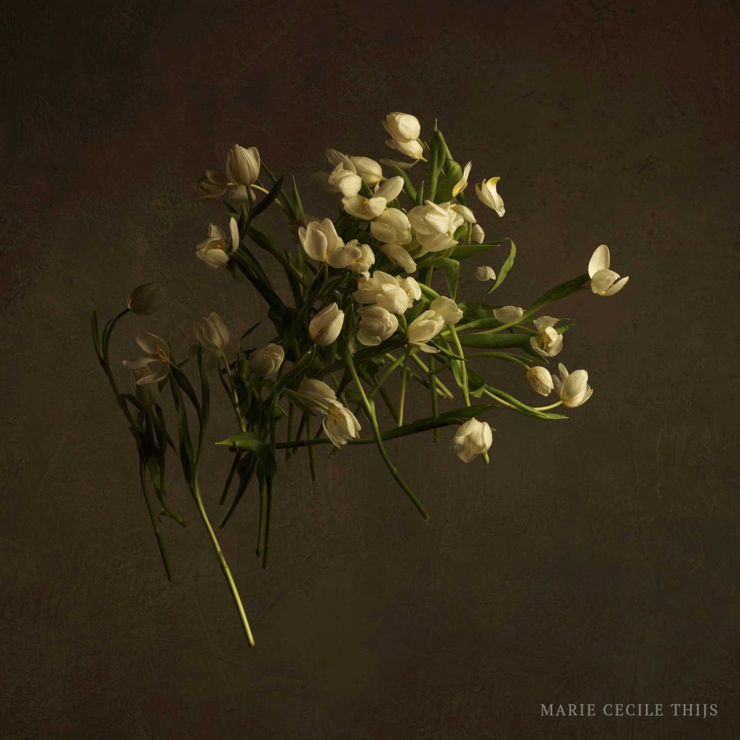 White Tulips Without Vase Studio Marie Cecile Thijs