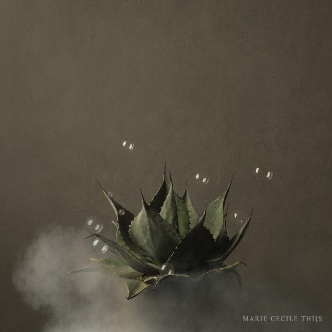 Cactus 2018