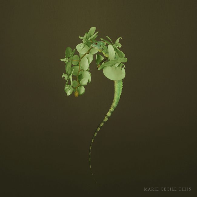 Chameleon Green Orchid © Marie Cecile Thijs