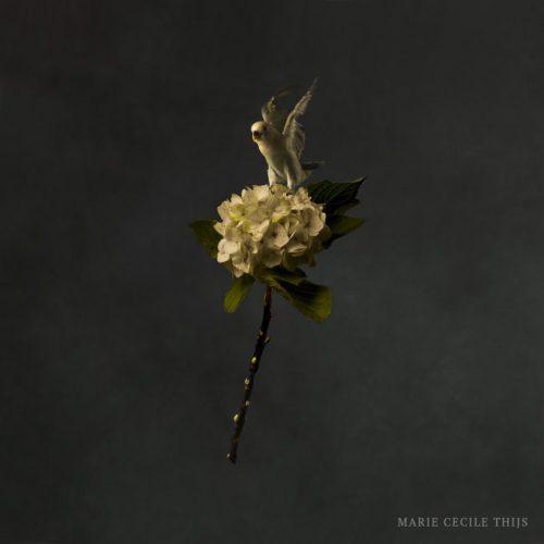 Flower and Flying Bird