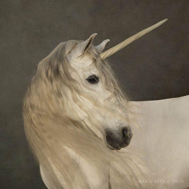 03_White-Unicorn_19-02-2015-full vk