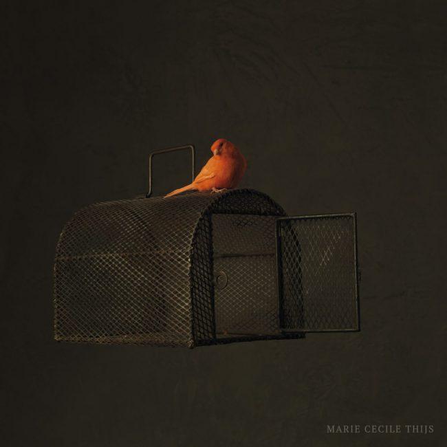 MF bird & cage
