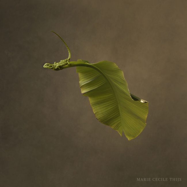 Leaf Lizzard © Marie Cecile Thijs 2020